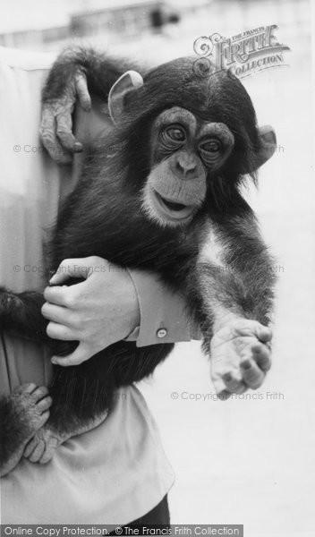 Photo of Cleethorpes Zoo, Chimpanzee c.1965