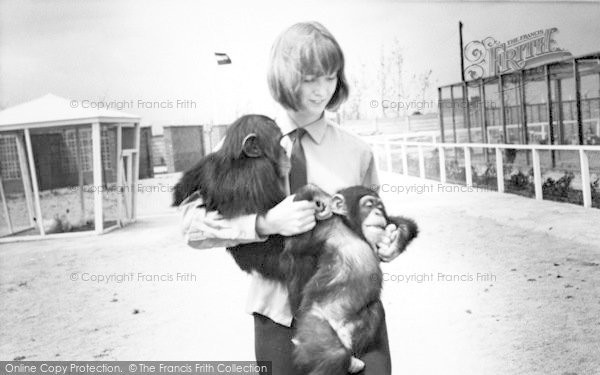 Photo of Cleethorpes Zoo, Chimpanzees c.1965