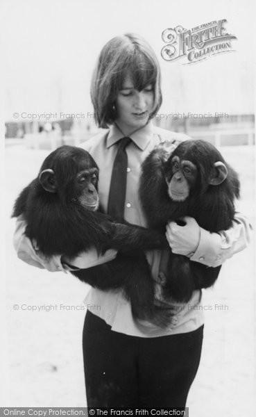 Photo of Cleethorpes Zoo, Chimpanzees c.1965