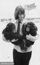 Cleethorpes Zoo, Chimpanzees c.1965