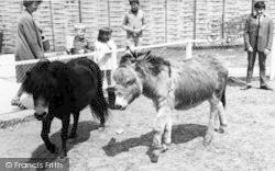 Cleethorpes Zoo, Donkey And Pony c.1965