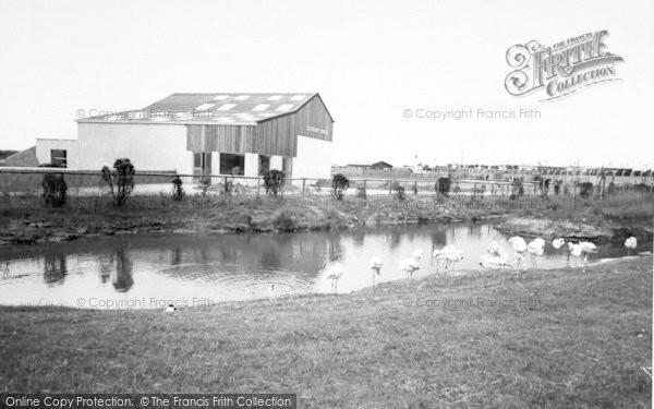 Photo of Cleethorpes Zoo, Flamingoes And The Elephant House c.1965