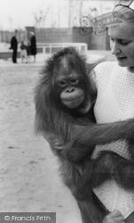 Cleethorpes Zoo, Orangutan c.1965