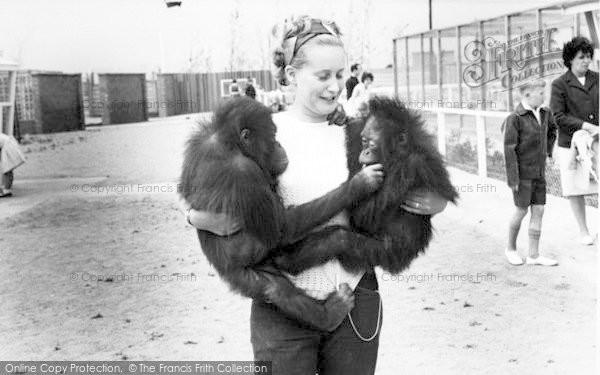 Photo of Cleethorpes Zoo, Orangutans c.1965