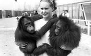 Cleethorpes Zoo, Orangutan c1965