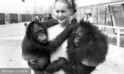 Cleethorpes Zoo, Orangutans c.1965