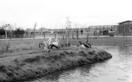 Cleethorpes Zoo, Pelicans c1965