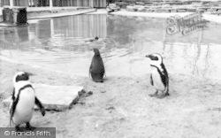 Cleethorpes Zoo, Penguins c.1965