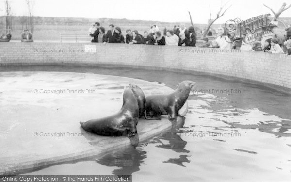 Photo of Cleethorpes Zoo, Sea Lions c.1965