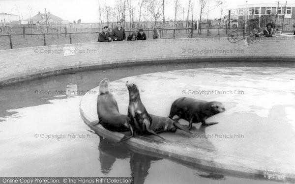 Photo of Cleethorpes Zoo, Sea Lions c.1965