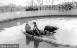 Cleethorpes Zoo, Sea Lions c.1965
