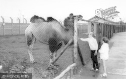 Cleethorpes Zoo, The Camel c.1965