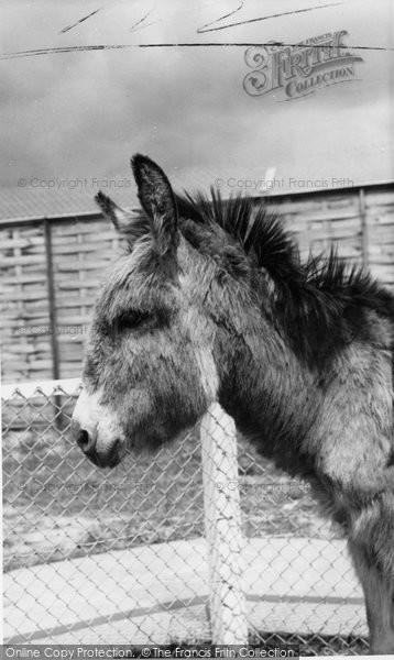 Photo of Cleethorpes Zoo, The Donkey c.1965