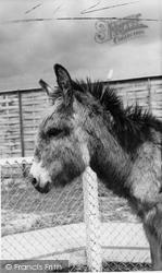 Cleethorpes Zoo, The Donkey c.1965