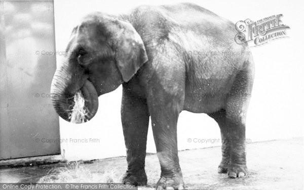 Photo of Cleethorpes Zoo, The Elephant c.1965