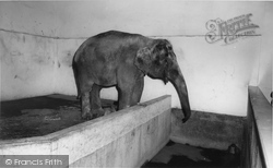 Cleethorpes Zoo, The Elephant c.1965
