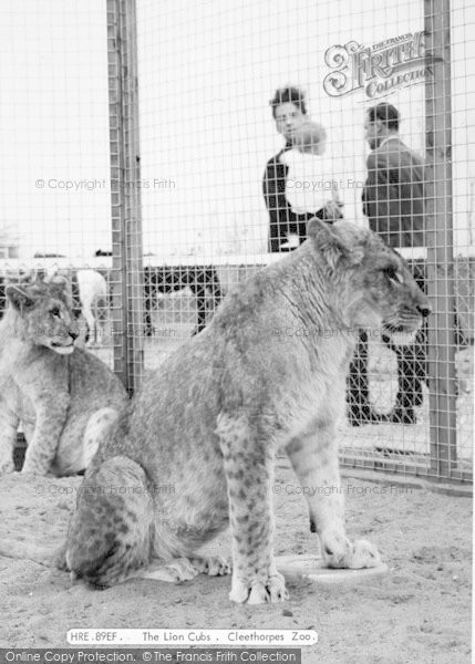 Photo of Cleethorpes Zoo, The Lion Cubs c.1965