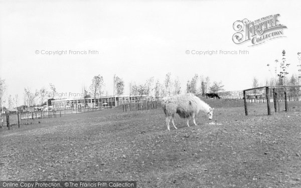 Photo of Cleethorpes Zoo, The Llama Pen c.1965
