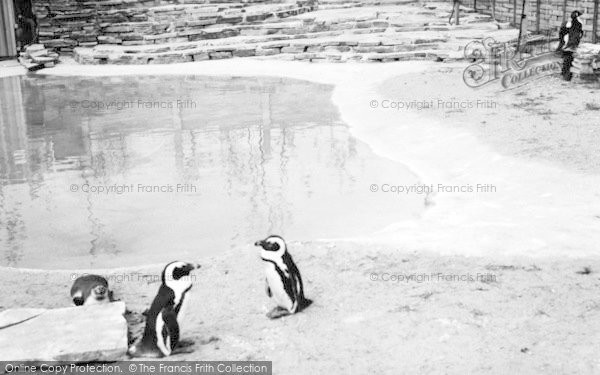 Photo of Cleethorpes Zoo, The Penguin Pool c.1965