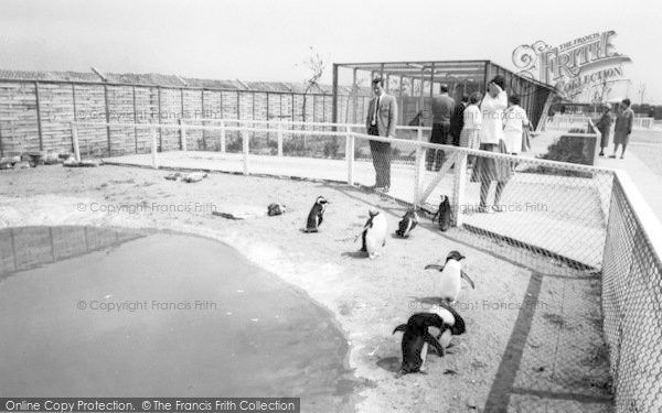 Photo of Cleethorpes Zoo, The Penguins c.1965