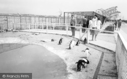 Cleethorpes Zoo, The Penguins c.1965