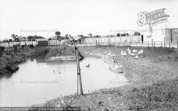 Photo of Cleethorpes Zoo, Waterfowl c.1965