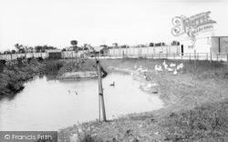 Cleethorpes Zoo, Waterfowl c.1965