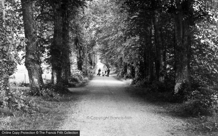 Photo of Clones, A Wooded Lane c.1950