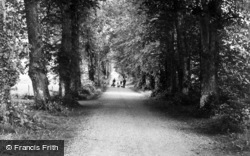 A Wooded Lane c.1950, Clones