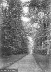 Cobham, The Avenue 1908