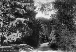 Mosses Wood 1906, Coldharbour