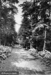 Redlands Wood 1904, Coldharbour