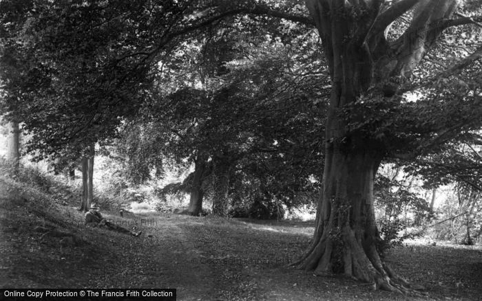 Photo of Colemere, Woods c.1935