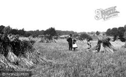 Coltishall, A Cornfield 1902