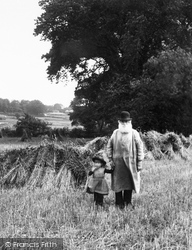 Coltishall, In A Cornfield 1902