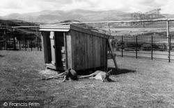 Colwyn Bay, The Welsh Mountain Zoo c.1963