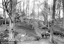 Compton, Ice House Woods 1907