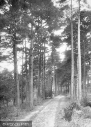 Cranbrook, Angley Woods 1901