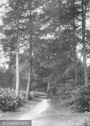 Cranbrook, Angley Woods 1925