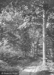 Cranbrook, Glassenbury Woods 1906