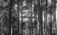 Cranbrook, Glassenbury Woods 1906