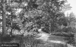 Cranbrook, Glassenbury Woods, Pin Pond Bay 1906