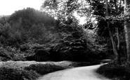 Cranham, the Woods 1907