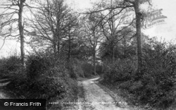 Crowborough, Pilmer Woods 1900
