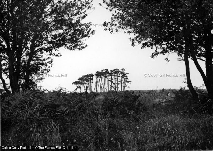 Photo of Crowborough, The Camel Clump c.1955