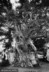 Yew Tree 1907, Crowhurst