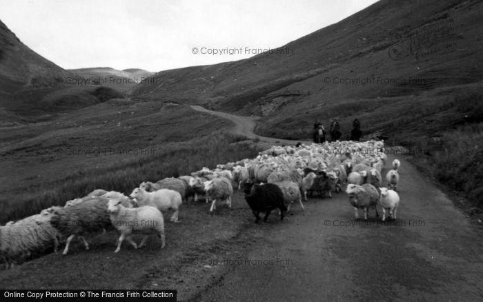 Photo of Cwmystwyth, Shepherds And Flock On Track To Llangurig 1961