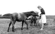 Dartmeet, Dartmoor Ponies c1960