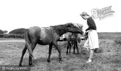 Dartmoor Ponies c.1960, Dartmeet