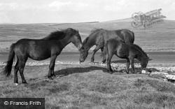 Dartmoor Ponies 1959, Dartmoor